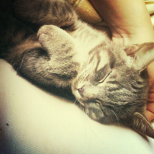 Cat Sleeping Roth Taking Photos