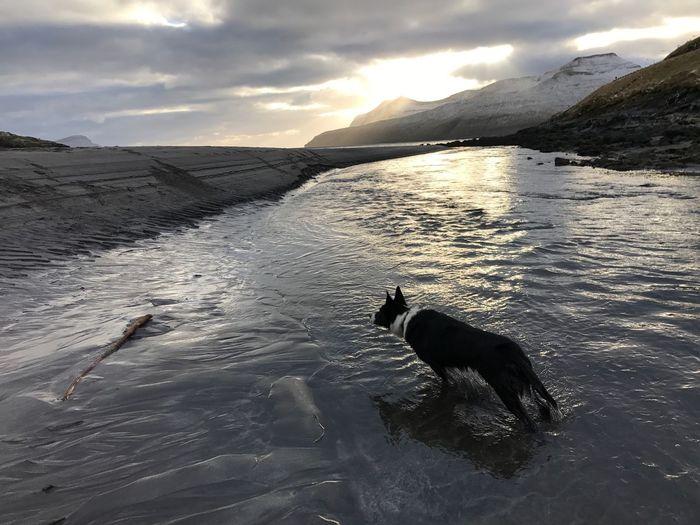 Keeping watch Dog Pets Whereistheball Winterbeach