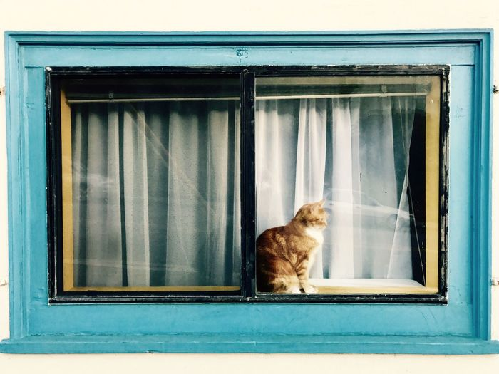 Domestic Cat Window One Animal Looking Through Window Window Sill Built Structure Building Exterior Catch The Moment EyeEm Selects San Francisco Street Photography EyeEmNewHere