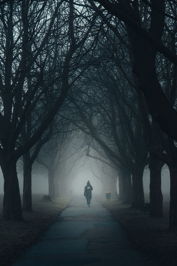 A lone man walks down a foggy tree lined path in a park.