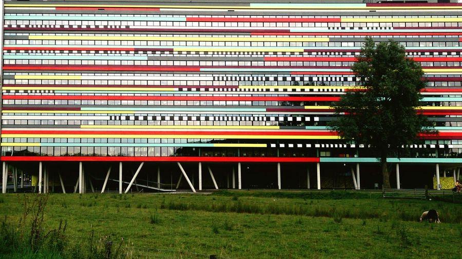 Contemporaty Modern Mayer S Columns Grass Tree RowA University Campus Colourful Campus Building Fascade Grass