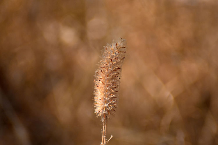 Close-up of dried plant on field