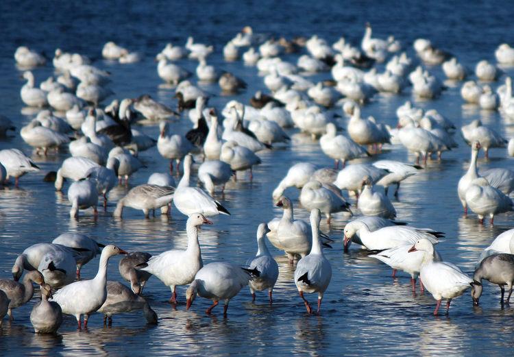 High angle view of geese on lake