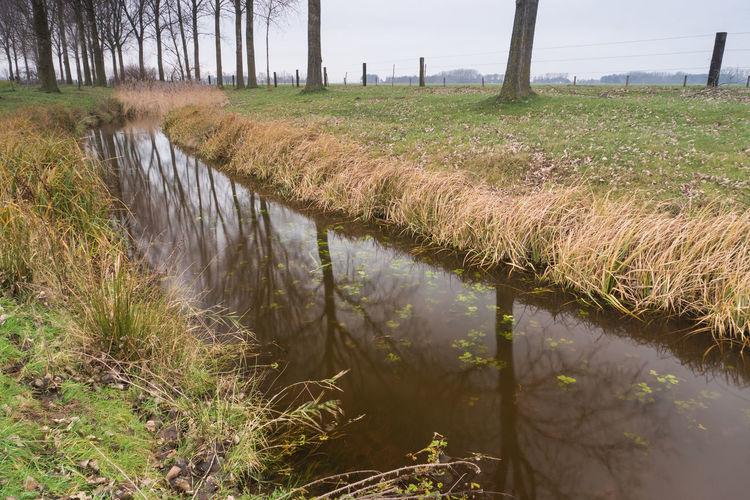 Oude Biezenkreek, Aardenburg EyeEm Market © Polarizing Filter Creek Plant Water Grass Tranquil Scene Landscape Scenics - Nature Sony A77ii Zeeuws Vlaanderen Zeeland  The Netherlands