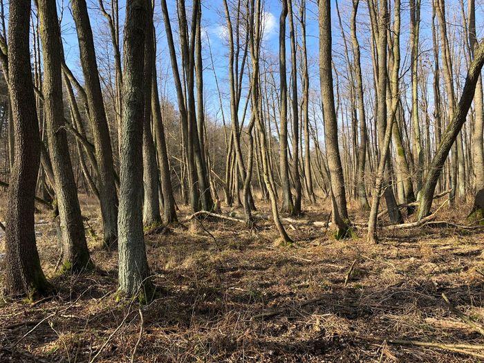 Februar Winter Sumpf Löcknitz Grünheide Landkreis Oder Spree Brandenburg Forest Tree Tree Trunk Nature WoodLand Outdoors Tranquility No People Scenics Sky Landscape Beauty In Nature Day