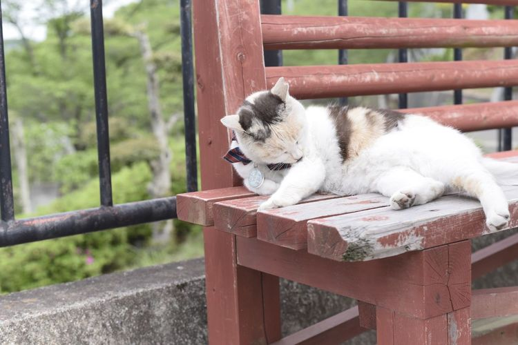 Cat sitting on wooden railing