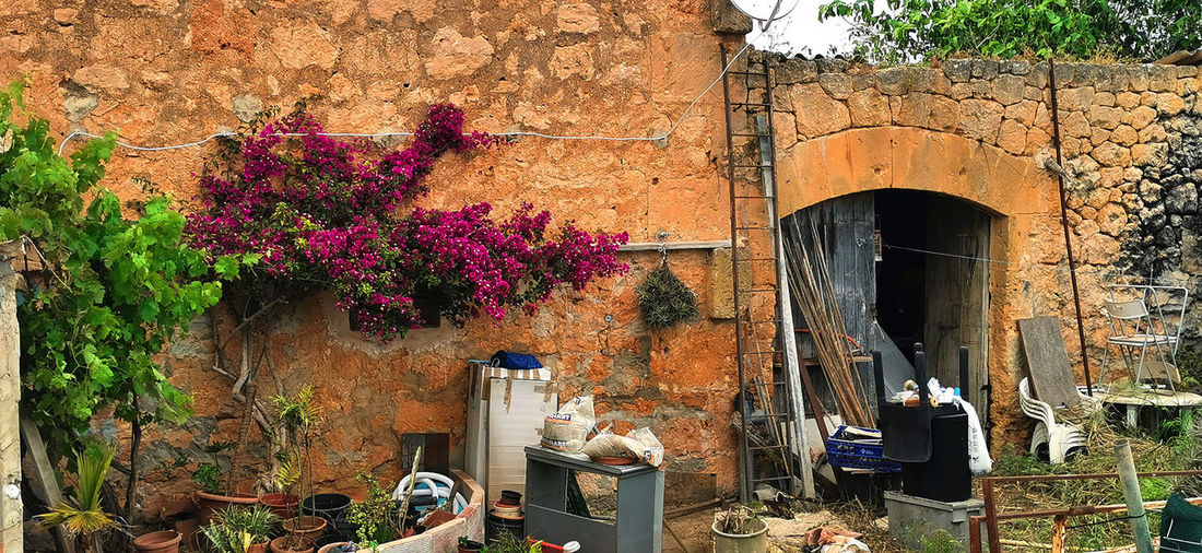 View of flowering plants against building wall