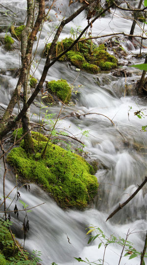 Tree Water Beauty In Nature Nature Long Exposure No People Flowing Water Waterfall Outdoors Tranquility Scenics - Nature River Forest Power In Nature Flowing Water