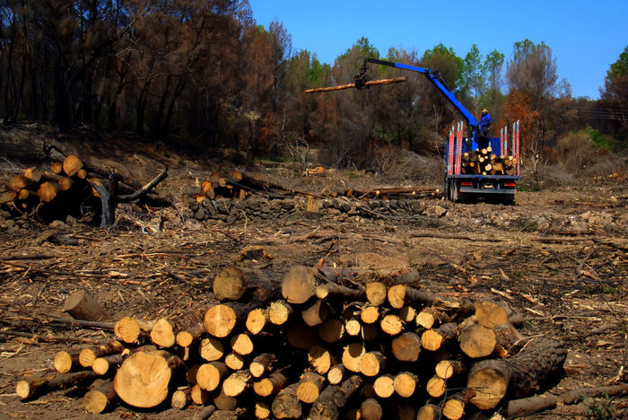 Wood Abundance Day Deforestation Deforestation Effect Felling Of Trees Large Group Of Objects Log Lumber Industry Men Nature One Person Outdoors People Real People Sky Stack Timber Tree