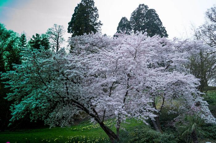 Endlich ist der Frühling da Takenbyme ShoutOut Sigma Nikonphotography Nikond3200 First Eyeem Photo Showcase April Tamron Tree Baum Blüte Frühling Spring Spring Flowers