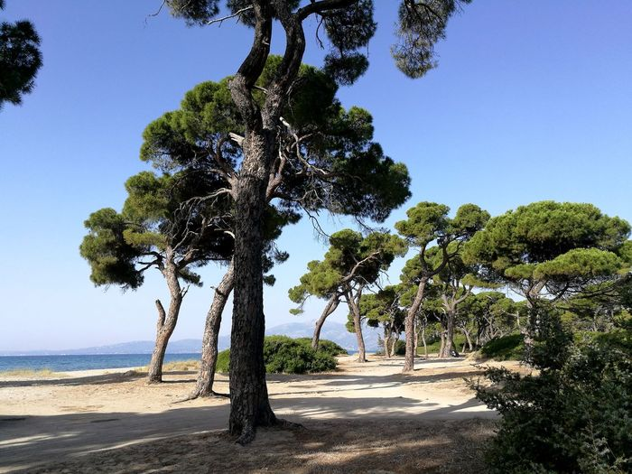 Beach Greece Roadtrip Enjoylifecolors Nature Beauty Nature Letstravel Travelgreece No People Vacation Time Illbeback GREECE ♥♥ Trees Trees And Sky Littlestoriesofmylife Tree Clear Sky Palm Tree Water Blue Sand Sunny Sky Close-up Landscape Pine Tree Long Shadow - Shadow Shore Woods