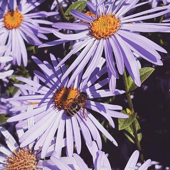 Macro Purple Flower Bee Smartphonephotography