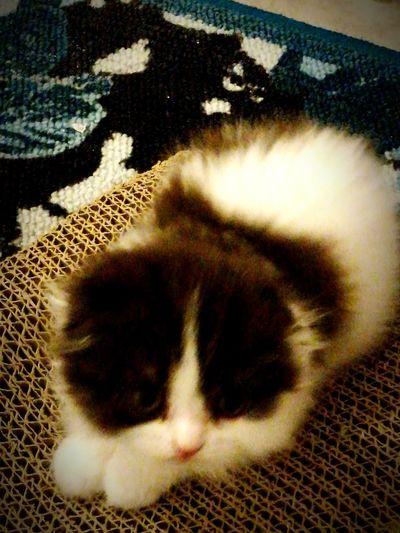 Fassy Pets Domestic Animals First Eyeem Photo