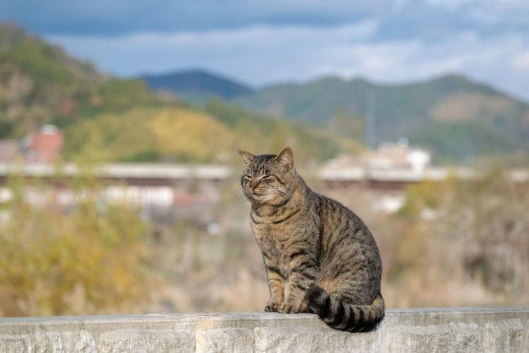 I am a cat.