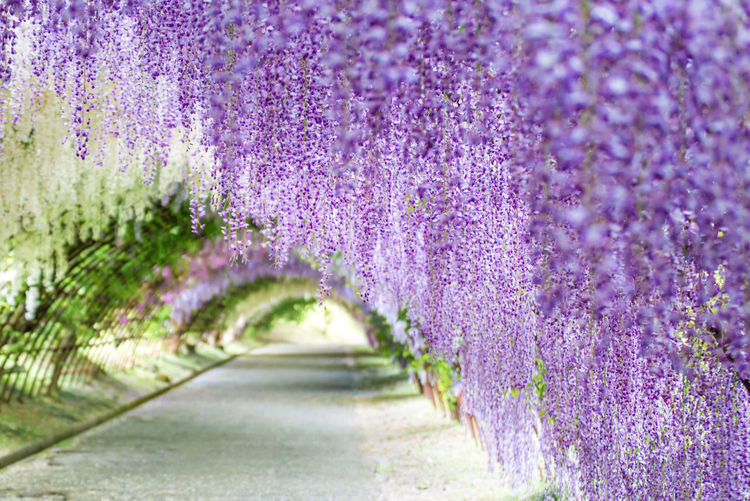 Close-up of purple flowering plants in garden