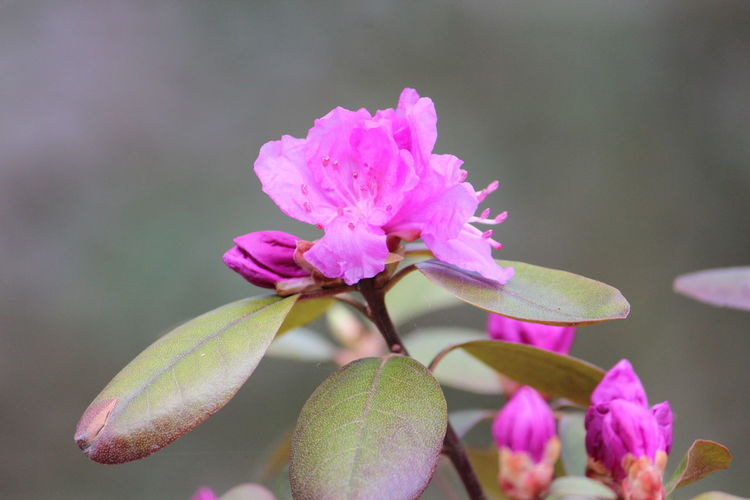 Flowering Plant Flower Plant Beauty In Nature Vulnerability  Fragility Pink Color Freshness Petal Close-up Growth Flower Head Inflorescence Focus On Foreground Nature No People Plant Part Leaf Day Bud Springtime