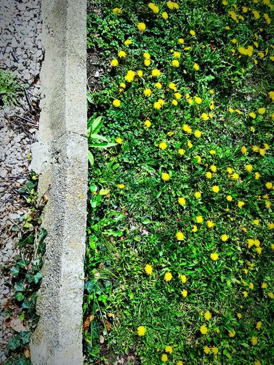 Grass High Angle View Green Color Outdoors No People Backgrounds Snapshot Urban Decay Looking Down Edit Nature Full Frame Day Field Growth Dandelion Concrete