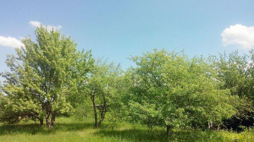 пейзаж Природа в Самара Россия