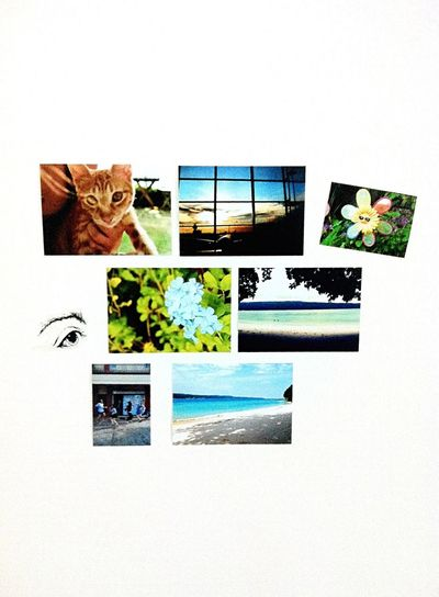 Snapshots Of Life Myownphotography Collection Hanging Onthewall White Background Real Photo Hobby Ilovephotography Olympus EPL2 Phillipines 2011 Photowall Taking Photos Cat Flower Beach People Nature EyeemPhilippines