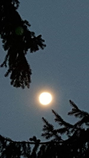 The moon between tree branches. Urban Nightsky Hugging A Tree Walking Around Taking Photos