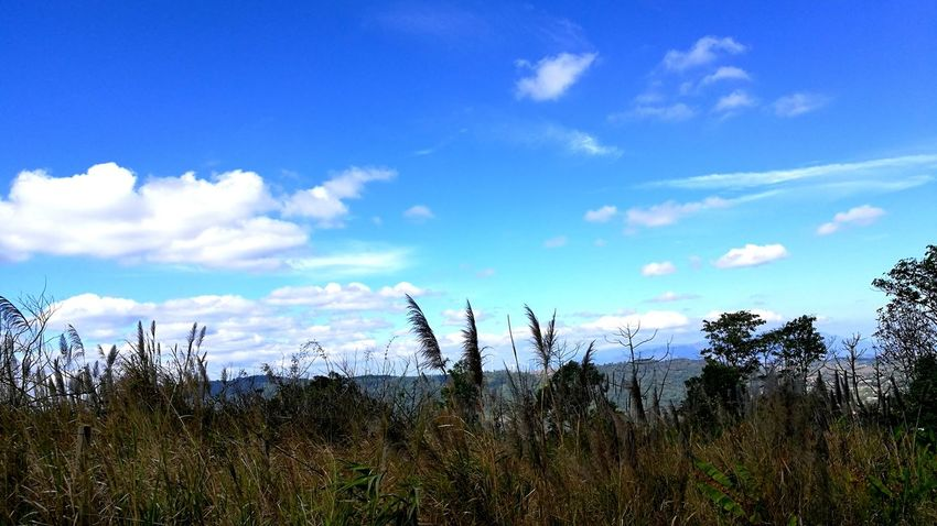 Cold Winter ❄⛄ KhaoKho,Thailand View Sky No People Cloud - Sky Nature Bird Day Outdoors Beauty In Nature