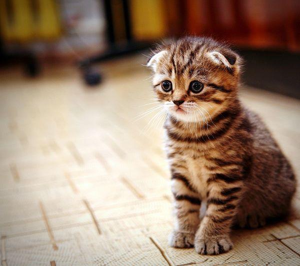 Close-Up Of Kitten Sitting On Floor