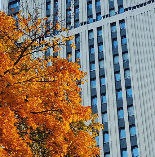 Building Exterior Tree Outdoors Architecture Growth Day Built Structure Low Angle View No People Nature Beauty In Nature Sky City