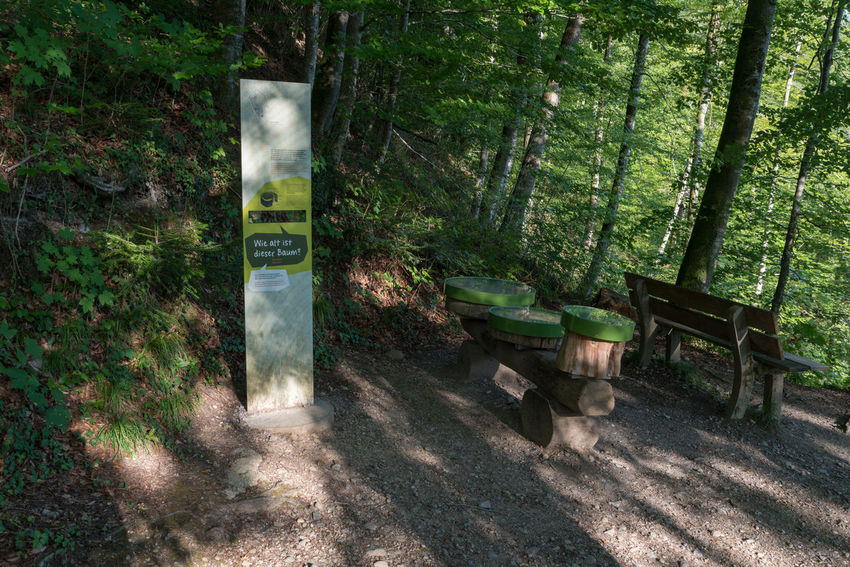 Zürichseerundweg Hiking Trail Waldweg Wanderweg Absence Bench Communication Day Field Forest Forest Track Fußweg Green Color Growth Information Land Nature No People Outdoors Plant Sign Switzerland Text Track Trail Tranquility Tree Wood - Material WoodLand