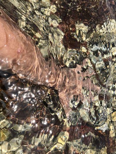 Full frame shot of turtle in sea