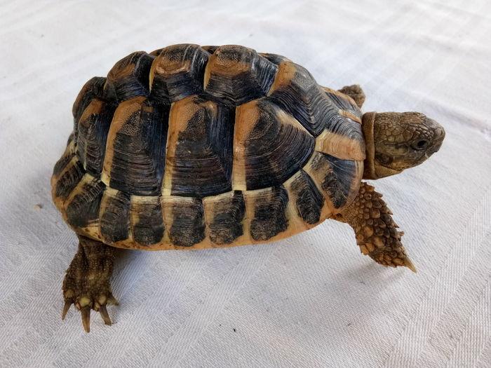 EyeEm Selects Tortoise Reptile Close-up Turtle Sea Life Sea Turtle