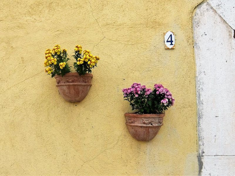 Architecture Beauty In Nature Building Exterior Built Structure Close-up Day Flower Flower Head Fragility Freshness Growth Nature No People Outdoors Plant Potted Plant Wall - Building Feature Window Box Yellow