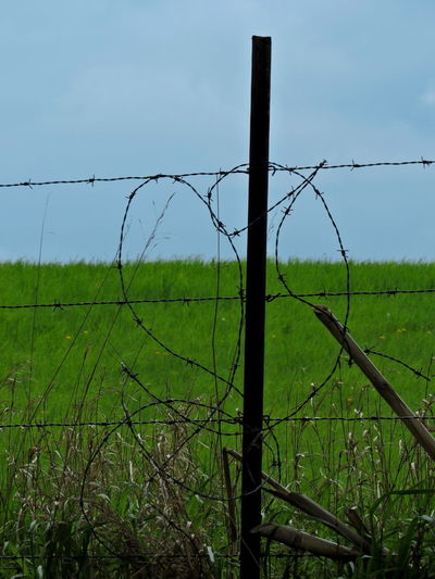 Fence Post With Barbed Wire Barbed Wire Fence Post Fence Boundary Barrier Field Barbed Wire Safety Wire Land Protection Security Grass Plant Nature Landscape Sky Day Green Color No People Metal Outdoors Wooden Post