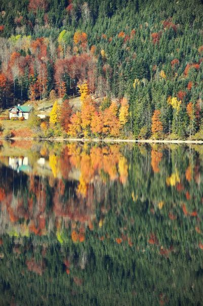 Reflection Altaussee Autumn Austria Autumn Change Leaf Tree Nature Reflection Tranquil Scene Day Scenics Beauty In Nature Tranquility Water Forest Lake Outdoors No People Mountain