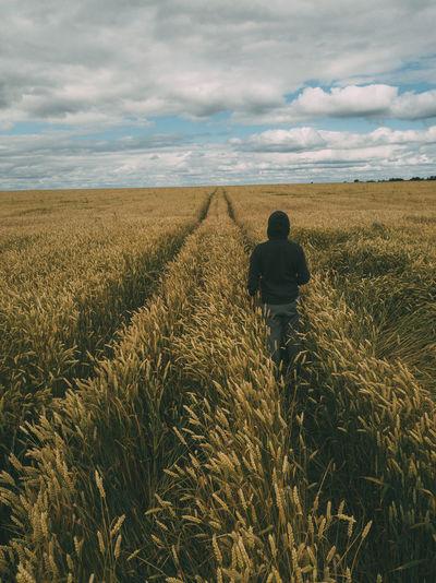 Man walking in a corn maze. cloudy sky, golden corn.