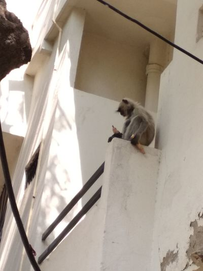 Mankey Eating A Sweet Patotoo Architecture Staircase Steps And Staircases Day Built Structure Skill  Low Angle View