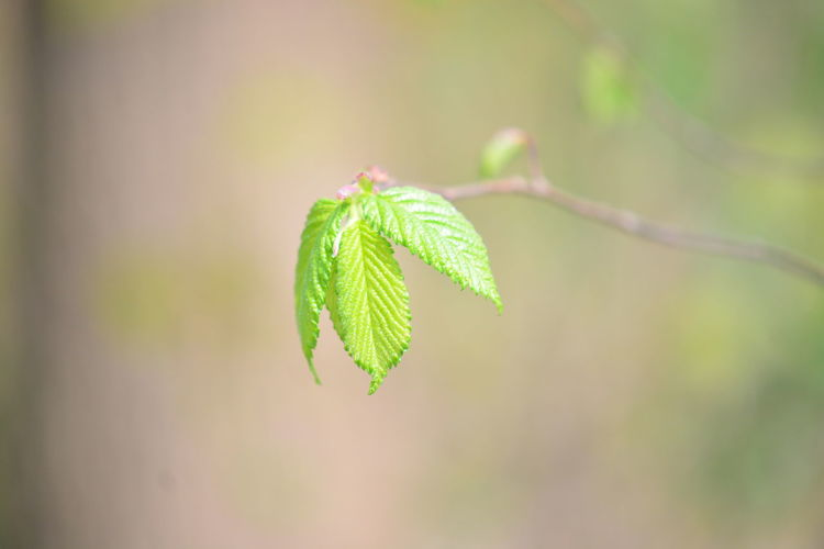 Green Color Plant Beauty In Nature Leaf Close-up Plant Part Focus On Foreground Growth Nature No People Day Outdoors Vulnerability  Fragility Beginnings Tree Selective Focus Tranquility New Life Freshness Leaves