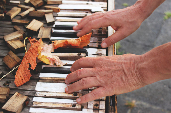 Keys Day Holding Human Body Part Human Hand Leaf Old Piano One Person Real People