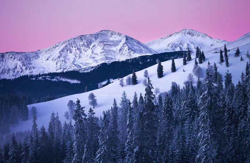 Winter landscapes with Rodnei Mountains, Romania. Alpine Ice Light Morning Nature Pink Rocky Trees Weather Winter Beauty Cold Fog Foggy Forest Landscape Mist Mountain Pine Tree Season  Snow Sunrise Tranquility White