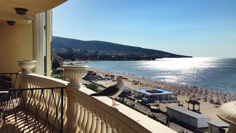 Seeing The Sights Bulgaria Sunny Beach Seagull Balcony Balcony View Seaside Sea Blue Landscape Water Trip Bird The Great Outdoors - 2016 EyeEm Awards The Essence Of Summer Feel The Journey