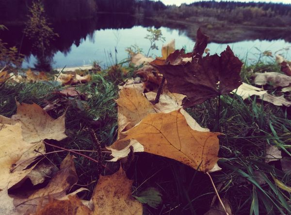 Leaf Nature Outdoors Tree Close-up Water Beauty In Nature No People Autumn Day Tranquility Grass Horizontal Осень 🍁🍂 листья листик природароссии First Eyeem Photo