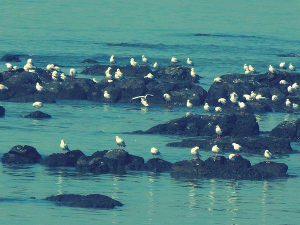 Migration Birds Outdoors