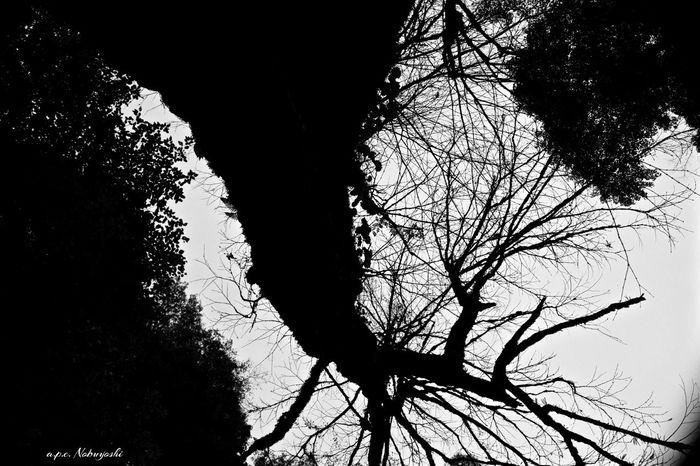 shadow -陰- Japan Fukui 福井 日本 Nature B&w Monochrome 静寂 Trees Shadow