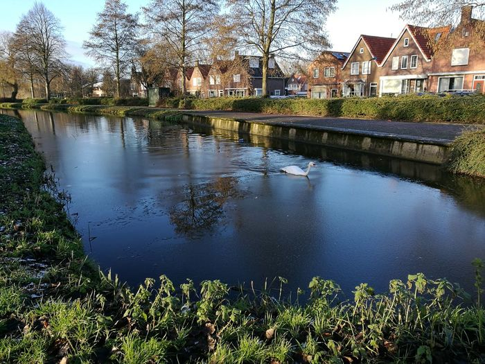 Nofilter nofilternoedit Volendam Netherland Volendam Sea Beautiful Nature Water Dutch Netherlands Lovely View Reflection Travel Destinations Vacations Sky Day No People Nature Beautiful Day Wintertime Holidays Outdoors Holand Waterway Swan Romantic Beautiful Nature Beautifulvillage