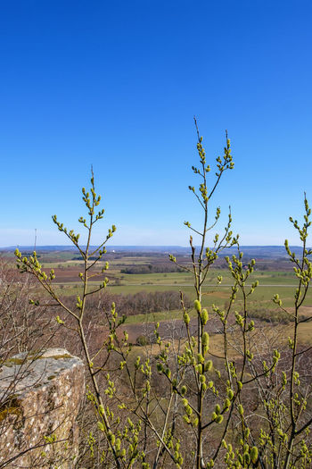 Plants growing on land against clear blue sky