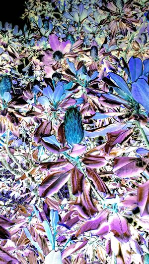 Magnolia in negative. Check This Out Majestic Nature Eye Em Nature Lover Taking Photos