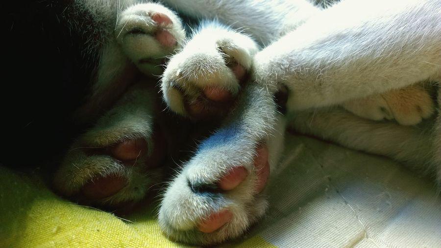 Close-up of dog sleeping