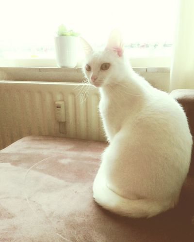 White cat sitting on window at home