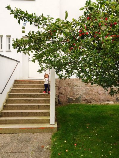 Steps Flower Fragility Freshness Growth Staircase Steps And Staircases Branch Railing Autumn Beauty In Nature Ancient Ancient Building Ancient City Child Girl Apple Tree Red Shoes Enthusiasm Climbing Day Nature Green Color Blossom In Front Of