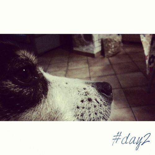 Sweet eyes. 100happydays Day2 Doglife Ilovemydog pet eyes dog Claudio