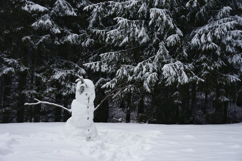 Snowy Trees Forest No People Snowman Tree Snowing Snow Cold Temperature Winter Polar Climate Pine Tree Pinaceae Deep Snow Coniferous Tree Evergreen Tree Cold Snow Covered Weather Condition Pine Woodland
